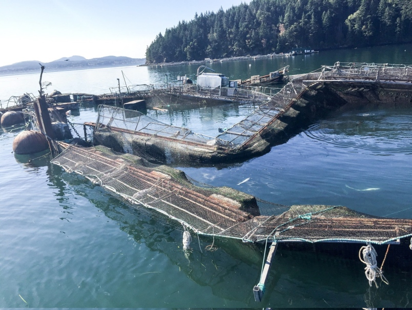 U s state senator pushes ban on fish farms and urges the for Opening day fishing 2017 washington